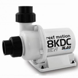 REEF MOTION 8KDC