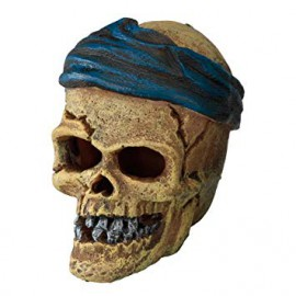 PIRATE SKULL HEAD CRACK 7.2c6c7.8cm AQUA DELLA