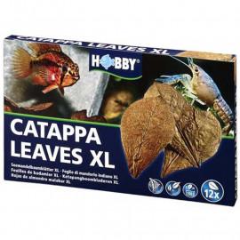 HOJAS DE CATAPPA HOBBY XL