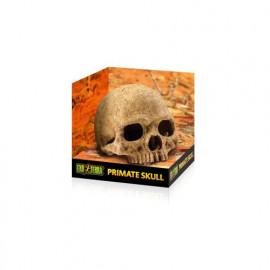 REFUGIOS FÓSILES EXO TERRA Primate Skull