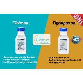 Copépodos Tigriopus 100 ml