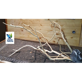 SANDA WOOD 50-80cm aprox