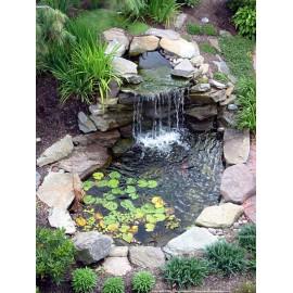 Plantas de estanque