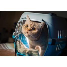 Viajar con gatos
