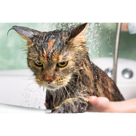 Jabón, higiene y belleza para gatos
