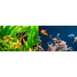 Peces, corales y amfibios