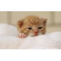 Gatitos ( max. 8 meses)