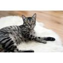 Gato Adulto (16 meses a 7 años)