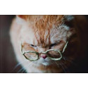 Gato senior (7 año +)