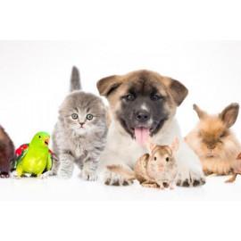 Varios mascotas